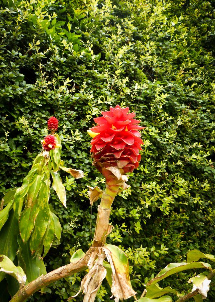 Que faire aux Açores parc botanique Furnas