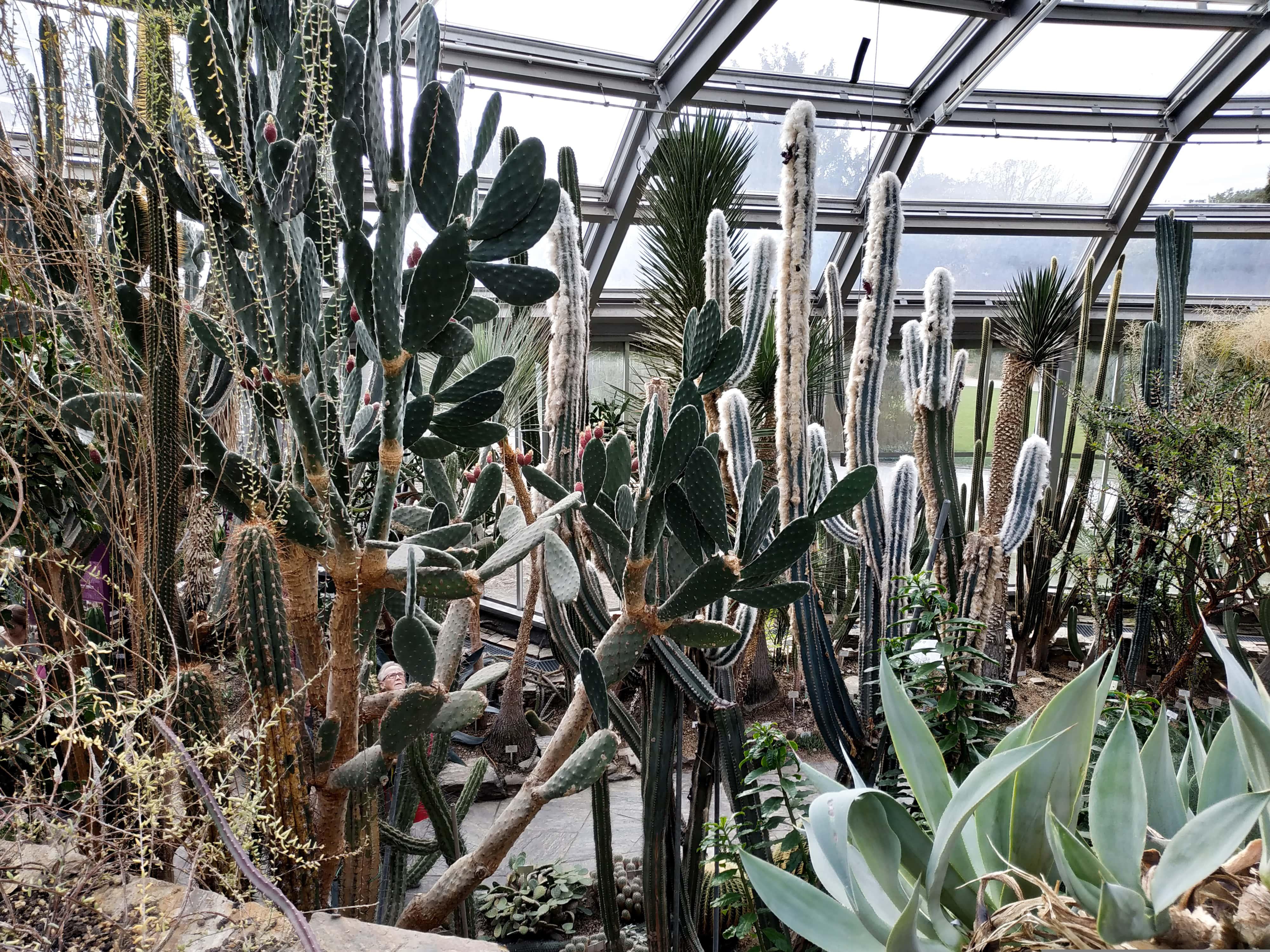 Découvrez le jardin botanique de Berlin à travers une balade automnale.