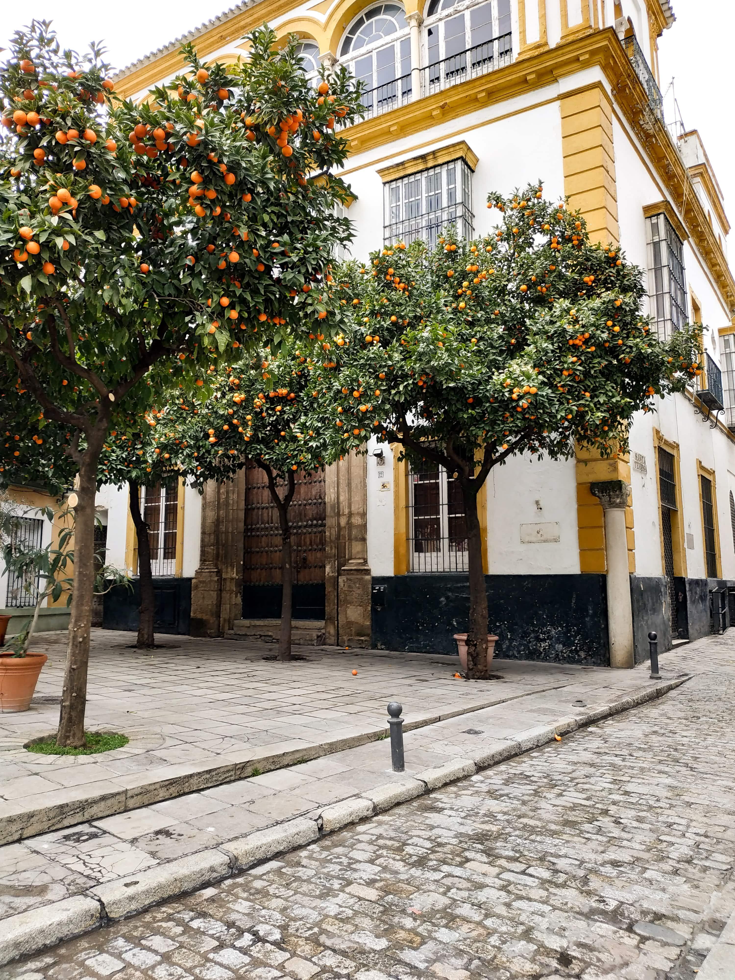 Séville : Partez à Séville à la découverte des quartiers Santa Cruz et La Macarena en plein mois de janvier.