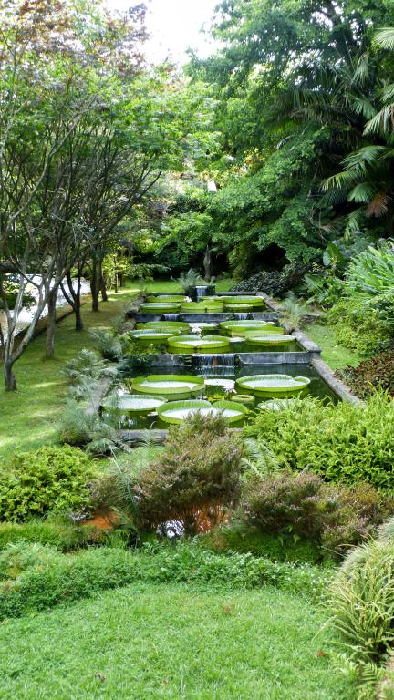 Voiture, logement, avions, ... : découvrez dans cet article comment organiser un road trip aux Açores sur l'île de São Miguel. Photo du jardin botanique de Terra Nostra à Furnas.