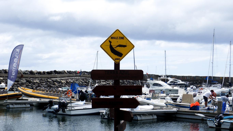 Voiture, logement, avions, ... : découvrez dans cet article comment organiser un road trip aux Açores sur l'île de São Miguel. Port qui propose des départs en mer pour aller voir les baleines à Vila Franca do Campo.