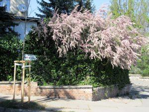 Balade à Budapest : la colline des roses