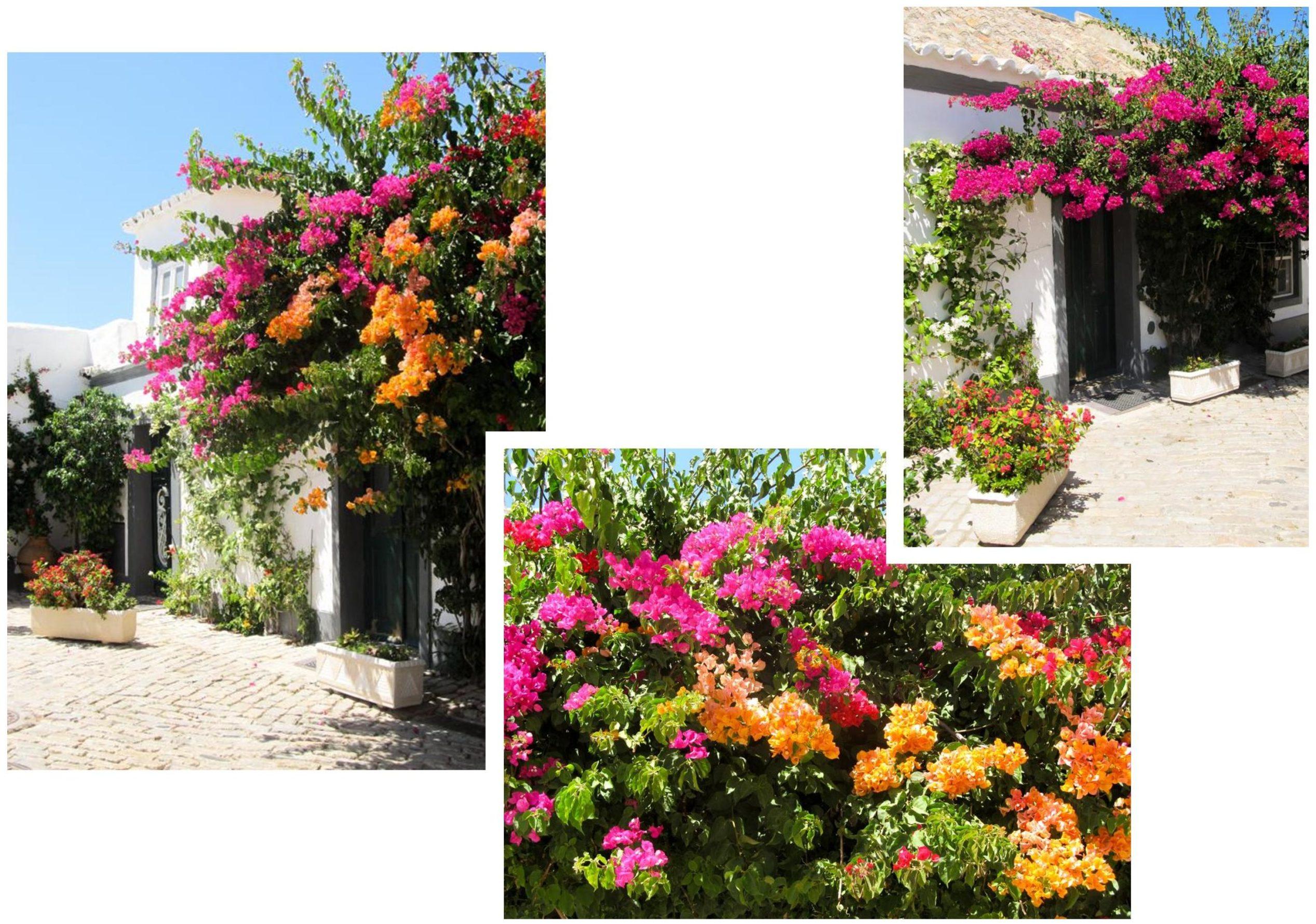Faro | Découvrez dans cet article les plus beaux endroits, notamment les plages et villages, de la côte sud de l'Algarve au Portugal.