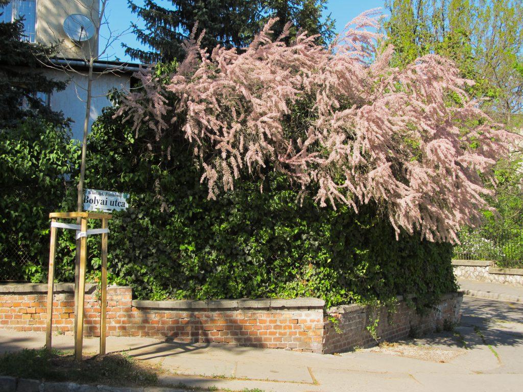 Visiter collines des roses Budapest
