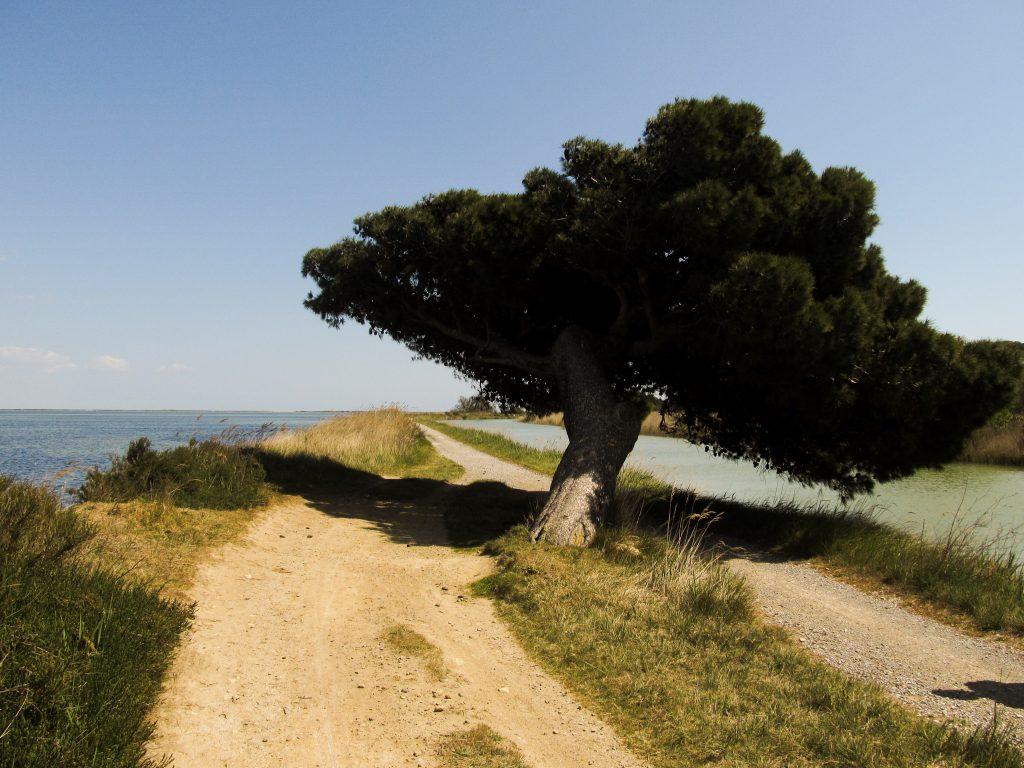 Visiter ile Sainte-Lucie - Golfe antique