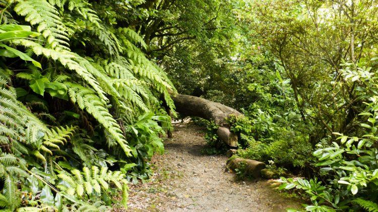 Visiter Furnas aux Açores